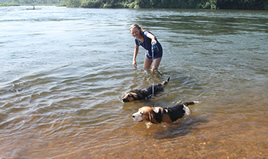 Swimming dogs in the River Nile